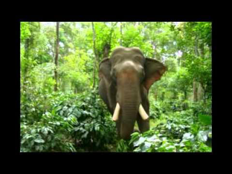 The Ivory Wars   An Elephants Bloodbath