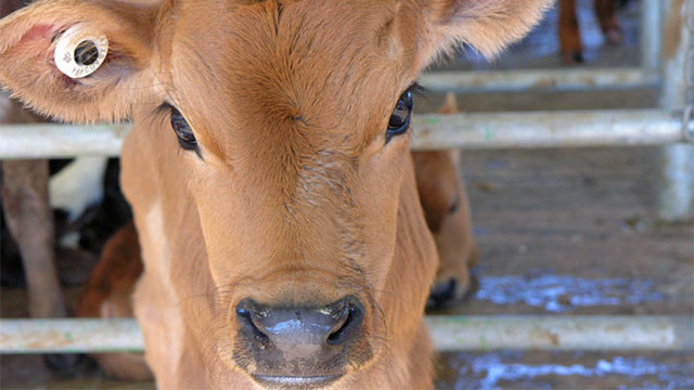 What you never knew about dairy