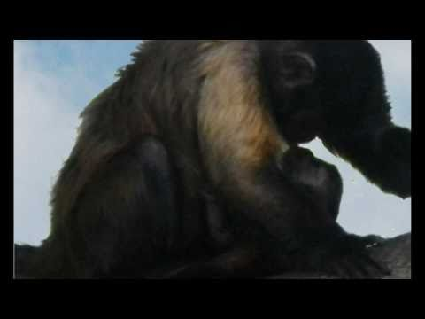 Broken Bonds-Trailer - Witness the miracle of a monkey's birth
