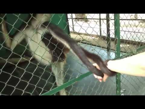 Close the zoo in Santiago, BCS, Mexico