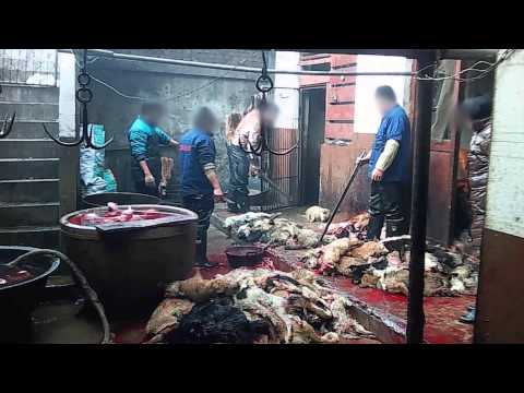Dogs Killed for Leather