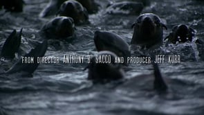Seal Wars Trailer 1