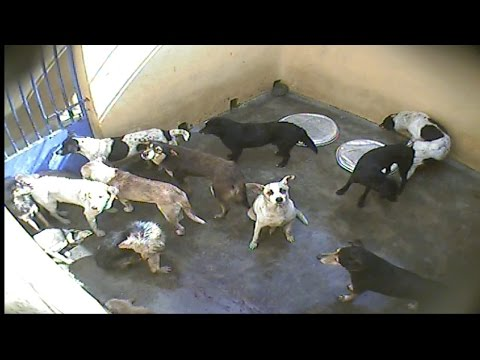 Dogs Killed in Cruel Ways in Mauritius