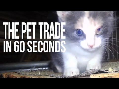 The Pet Trade in 60 Seconds Flat