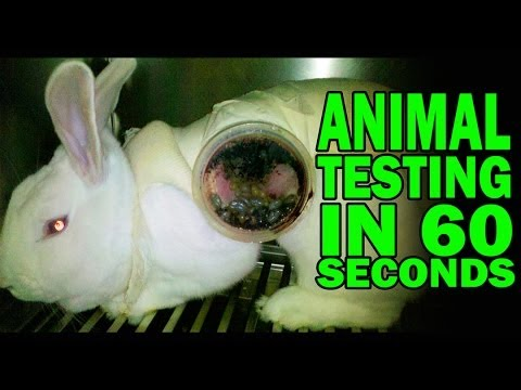 Animal Testing in 60 Seconds Flat