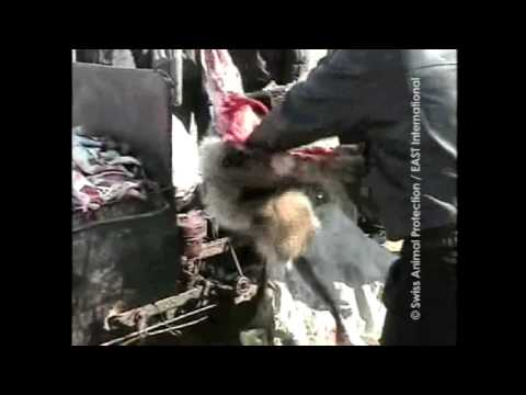 A Shocking Look Inside Chinese Fur Farms
