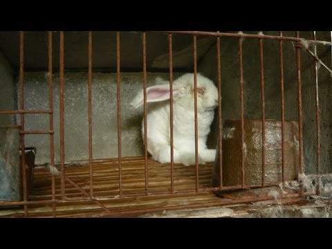The Truth Behind Angora Fur