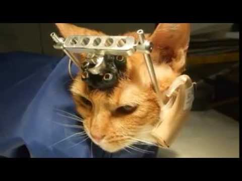 WARNING GRAPHIC CONTENT! Peta video uncovers experiments on cats