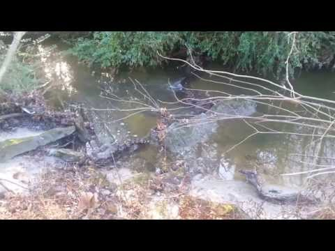 Natural Orgone Energy Sites(Gills Creek SC)