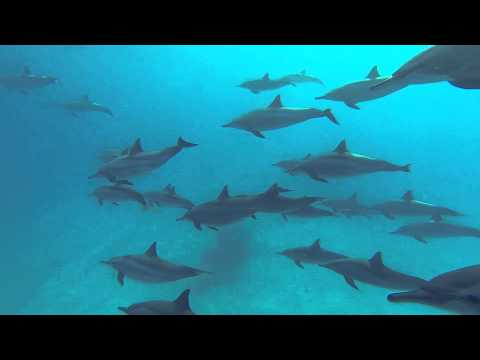 Dolphin Song Cruise May 2015 ~ Video by Jeremie