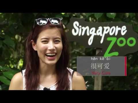 Ep 3: Singapore Zoo - Zoo animals and useful adjectives in Chinese - Fiona Tian