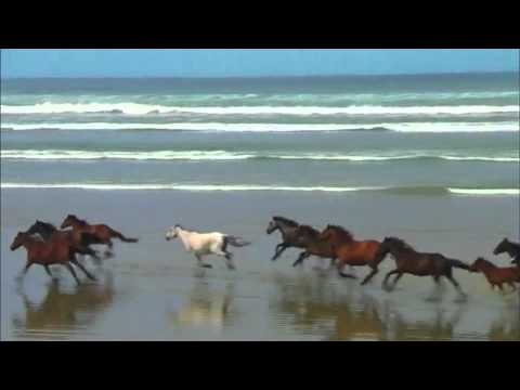 """A Horse Called Sunshine"" SongLever Music Clip"