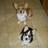 Sherrys pups Kali & Kowboy