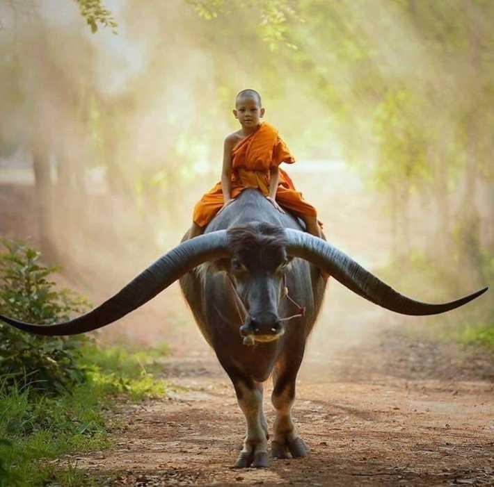Boy monk riding buffalo by Saravut Whanset