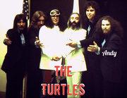 Turtles wAndy