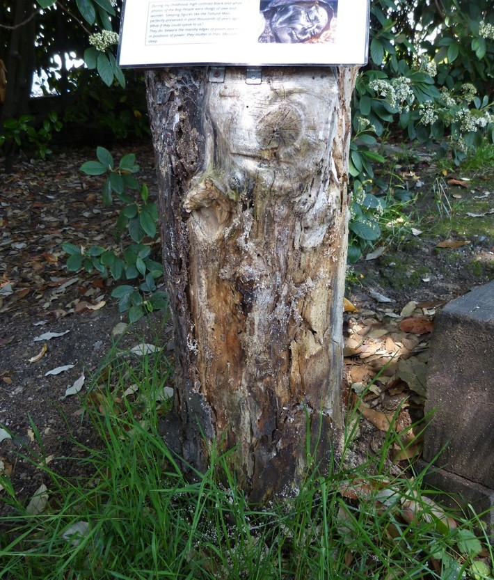 Decaying tree stump used for displaying poems is riddled with insect nest holes, June 27th '19.