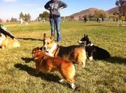 Northern Nevada Corgis Meetup