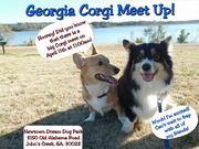 April Georgia Corgi Meet Up!!