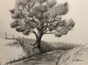 pencil drawing. Tree