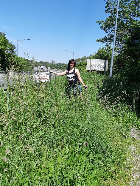 Pollinator Habbitat Update June 2019