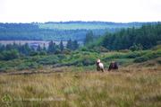 Forgotten Horses Ireland 48