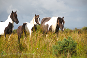 Forgotten Horses Ireland 52