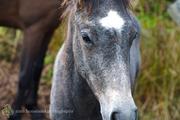 Forgotten Horses Ireland 35