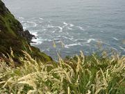 West Kerry Pics 071