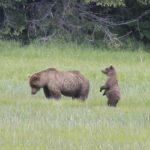 Bears-10-150x150