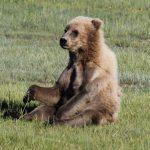 Bears-13-150x150