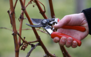 How & Why to Prune