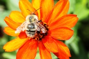 Your Backyard Is A Habitat: Chemical-Free And Pollinator-Friendly Gardening