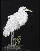 great-egret-on-black