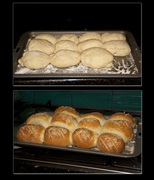 Backyard Bakers - all types of bread