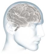 Latinos y el Alzheimer