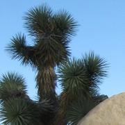 PDC - October 8-19, 2012 - Cal-Earth, CA