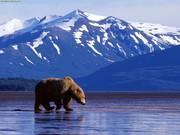 Alaska Brides & Vendors