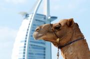 UAE/Dubai/Abu Dhabi
