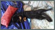 Орион  спит с мышонком в обнимку