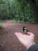 Птичьи истории-2