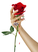 Virágokról
