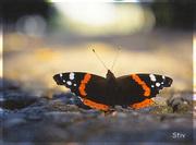 ЛЕТЯЩИЕ НА СВЕТ: «…мы словно бабочки к огню, стремимся так неумолимо…»