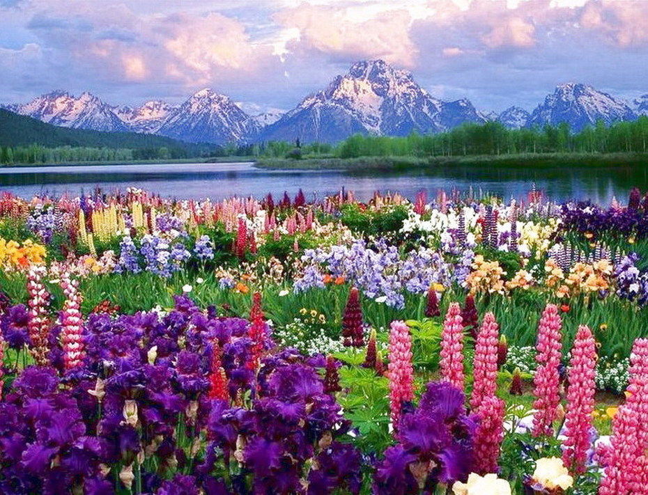 Горы и райские цветы