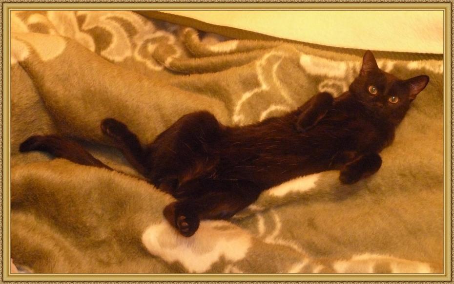 Кот нежится на пледе