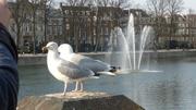 Гаага - Нидерланды №2