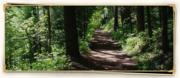 Deep Woods Path