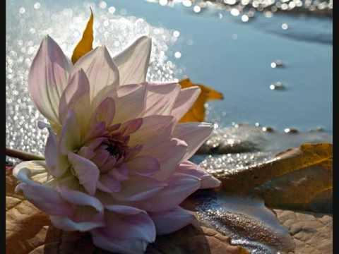 Любовь на языке цветов !
