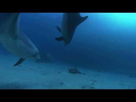 ДЕЛЬФИНЫ: Dolphins In The Deep Blue Ocean, Part 1/6 [HD]