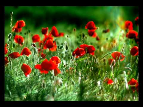 Samuel Barber - Adagio for Strings. / Seelenrauschen -  Visual Meditation and Relaxation