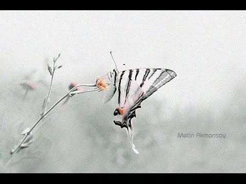 Photographer Metin Akmansoy